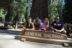 sequoia_1_b8fb56ec644dc588c6f315ae43ed7910